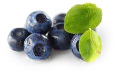Blueberries Royalty Free Stock Photo