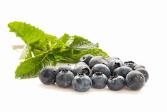 Blueberries. Organic blueberries with a sprig of mint in the background. Selective focus with shallow DOF Stock Photography