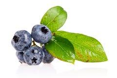 Free Blueberries Stock Image - 2892561