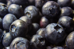 Blueberries. A close-up shot of a pile of blueberries filling the frame Royalty Free Stock Photo