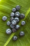 Blueberries. Stock Images