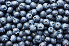 Free Blueberries Stock Photography - 52115402