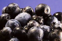 Blueberries. In pile Royalty Free Stock Photos