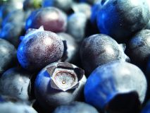 Blueberries. Macro stock photo