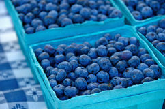 Blueberries in aqua boxes Royalty Free Stock Image