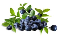 Blueberries_arrangement Fotografia Stock Libera da Diritti