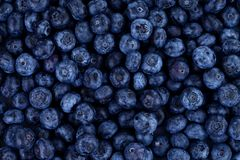 Blueberries as background Stock Photos