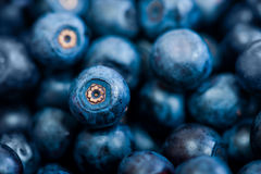 Blueberries as background. Fresh blueberries as summer  background Royalty Free Stock Photos