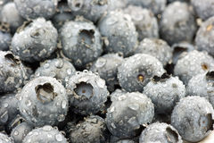 Blueberries background. Organic blueberries background in macro shot Royalty Free Stock Image