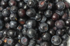 Blueberries background Royalty Free Stock Photo