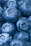 Blueberries background Stock Photography