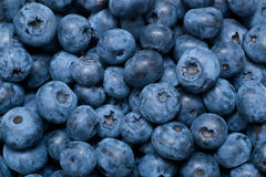 Blueberries background. Assorted blue berries background with studio lightning stock image