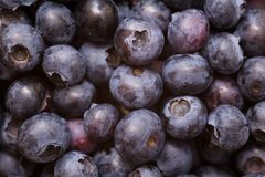 Blueberries background Stock Photo