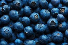 Blueberries Background Close-up royalty free stock images