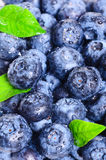 Blueberries background Stock Image
