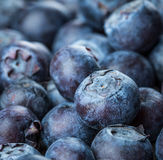 Blueberries background Royalty Free Stock Photography