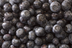 Blueberries. Background fully filled with blueberries Stock Photography
