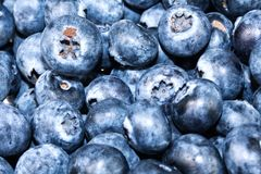 Blueberries background for kitchen design royalty free stock photography