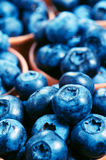Blueberries background. Rich harvest of blueberries Royalty Free Stock Photo