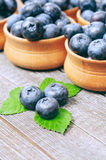 Blueberries. Background,rich harvest of Stock Photos