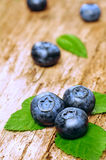 Blueberries background. Rich harvest of blueberries Royalty Free Stock Image