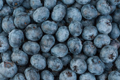 Blueberries background. Background of wet ripe blueberries royalty free stock images