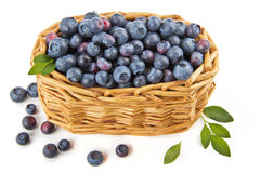 Blueberries in a basket. Arrangement in a basket of blueberries Stock Photos