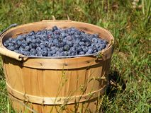 Blueberries in a Basket Stock Photos