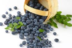 Blueberries in basket Royalty Free Stock Image