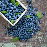 Blueberries in basket Royalty Free Stock Photos
