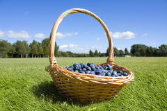 Blueberries in the basket outside Royalty Free Stock Photos