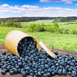 Blueberries in a basket is scattered on the table Royalty Free Stock Images