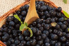 Blueberries in basket with wooden spoon. Ready for a spoon of health Royalty Free Stock Images