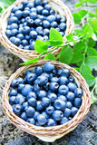 Blueberries baskets Stock Photo