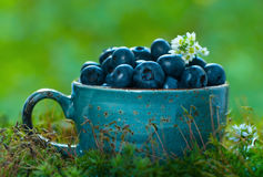 Blueberries in a blue cup Stock Photos