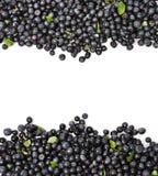 Blueberries Border. Fresh Blueberries Border Isolated on a White Background Royalty Free Stock Image