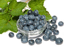 Blueberries in a bowl. Blueberries (lat. Vaccinium Myrtillus) in a bowl with green leaves as decoration stock photos
