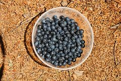 Blueberries in a bowl Royalty Free Stock Photos