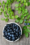 Blueberries in bowl, top view Royalty Free Stock Photo