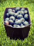 Blueberries in Box Royalty Free Stock Photos
