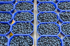 Blueberries in a box. On the market Royalty Free Stock Photo