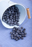Blueberries in a bucket Stock Photography