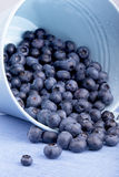 Blueberries in a bucket Stock Image