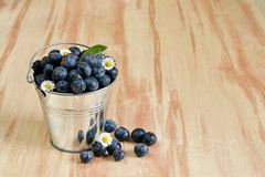 Blueberries in a bucket with daisy flowers. Breakfast with tea, honey, blueberries and yogurt for healthy lifestyle. Copyspace above stock photography