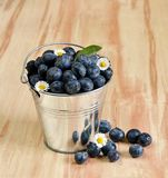 Blueberries in a bucket with daisy flowers. Copyspace above stock image