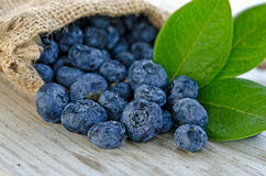 Blueberries in burlap bag. Close up of blueberries with leaves spilling out of a burlap sack on weathered wood surface royalty free stock photography