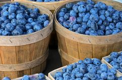 Blueberries in bushel baskets Stock Photos