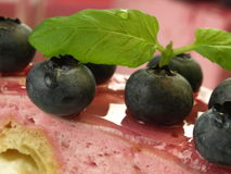 Blueberries on cheesecake,closeup Stock Images