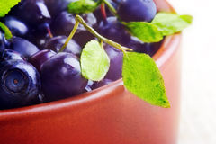 Blueberries, close up. Blueberries in the bowl, macro Royalty Free Stock Photography