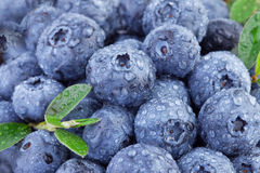 Blueberries in close up Royalty Free Stock Image